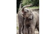 """Trauer in Hagenbeck: Elefant """"Anjuli"""" am Mittwoch verstorben"""