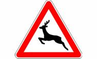 Vorsicht, Wildwechsel: Erhöhte Aufmerksamkeit gefragt!